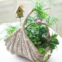 Mini Garden - Basket